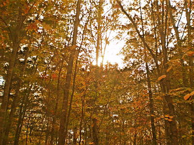 Photograph - North Carolina Woods by Utopia Concepts