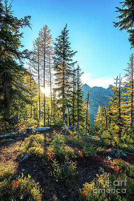 Photograph - North Cascades Fall Sunlight by Mike Reid
