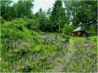 Photograph - North Country Nod To Monet by Wayne King
