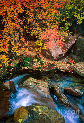 Zion National Park Photograph - North Creek Fall Foliage by Inge Johnsson