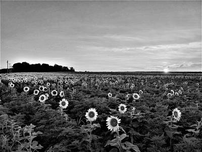 Photograph - North Fork Sunflowers 2 B W by Rob Hans