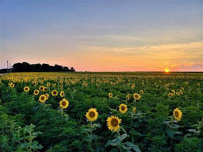 Photograph - North Fork Sunflowers 2 by Rob Hans