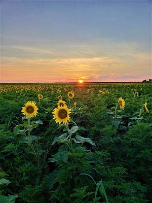 Photograph - North Fork Sunflowers by Rob Hans