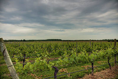 Photograph - North Fork Vineyard And Sky by Steve Gravano