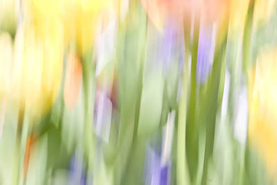 Photograph - North Hills Tulips II by Margaret Denny