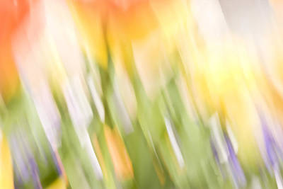 Photograph - North Hills Tulips IIi by Margaret Denny