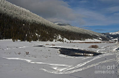 Photograph - North Of Yellowstone by Cindy Murphy - NightVisions