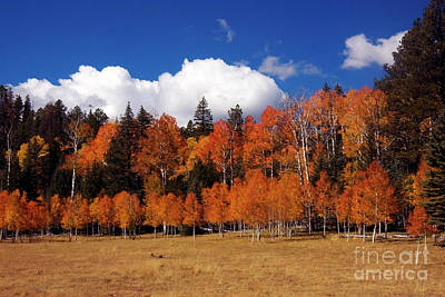 Aspen Forest Photograph - North Rim Autumn by Mike Dawson