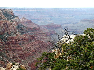 Photograph - North Rim Grand Canyon by Charlotte Schafer