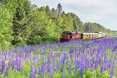 Photograph - North Shore Scenic Railroad by Mary Amerman