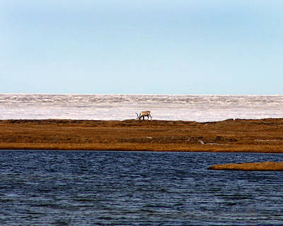 Photograph - North Slope by Anthony Jones