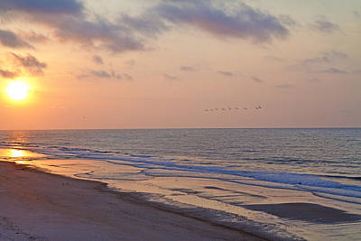 Sea Birds Photograph - North Topsail Beach Glory by Betsy Knapp