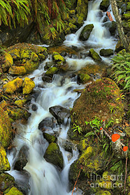 Photograph - North Vancouver Island Waterfall by Adam Jewell