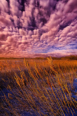 Photograph - North Wind by Phil Koch