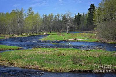 Photograph - North Woods Dreams by Skip Willits
