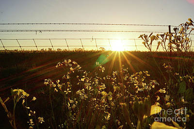Photograph - Northam Sunset by Cassandra Buckley