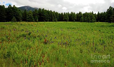 Photograph - Northern Arizona Meadow by Scott Sawyer