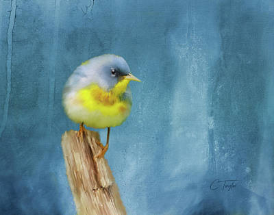 Northern Blue Song Bird Art Print by Colleen Taylor