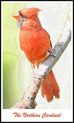 Bunting Digital Art - Northern Cardinal by A Gurmankin