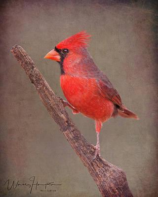 Photograph - Northern Cardinal - 6359,st by Wally Hampton