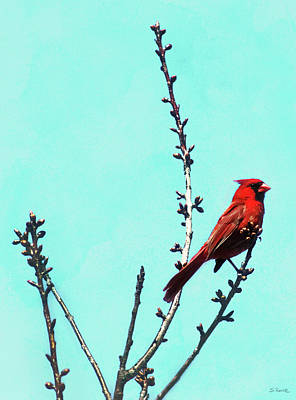 Photograph - Northern Cardinal In Tree by Shawna Rowe