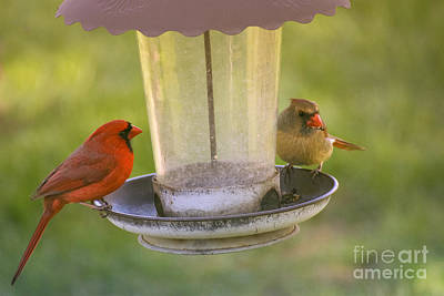 Photograph - Northern Cardinal Pair by Rima Biswas