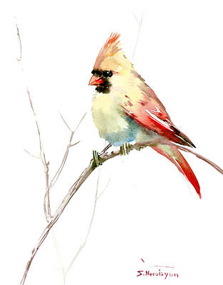 Northern Cardinal,female Art Print