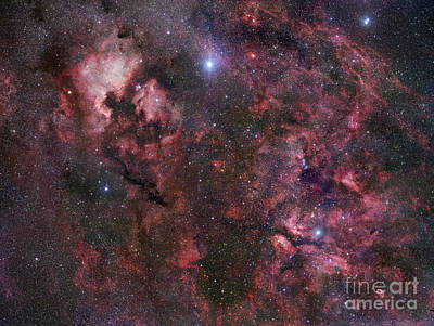 Ic Images Photograph - Northern Cygnus by Robert Gendler