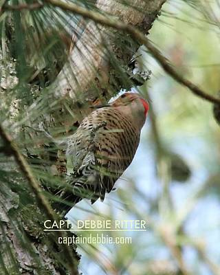 Photograph - Northern Flicker 7510 by Captain Debbie Ritter