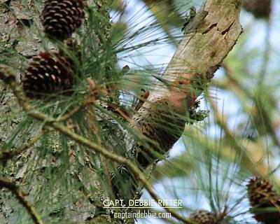 Photograph - Northern Flicker 7516 by Captain Debbie Ritter