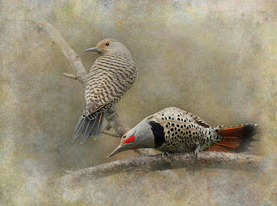Photograph - Northern Flickers by Angie Vogel