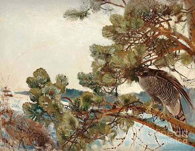 Bruno Painting - Northern Goshawk by Celestial Images