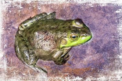 Digital Art - Northern Green Frog by Rusty R Smith