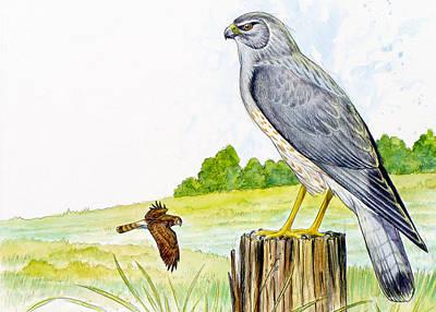 Painting - Northern Harrier by Shari Erickson