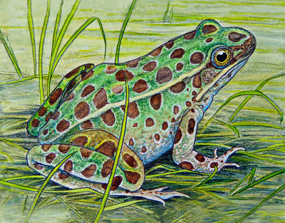 Painting - Northern Leopard Frog by Shari Erickson