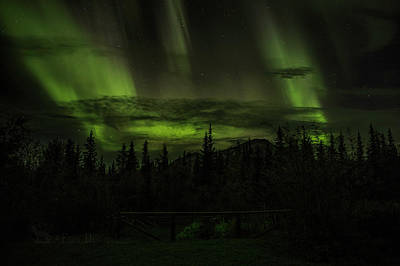 Photograph - Northern Lights by Fred Denner