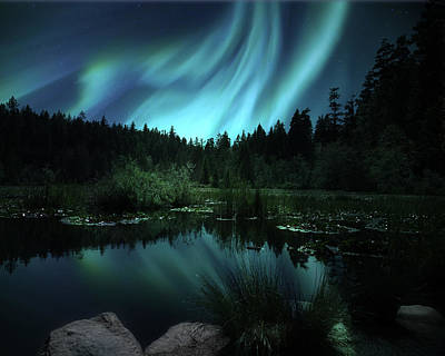 Northern Lights Over Lily Pond Art Print