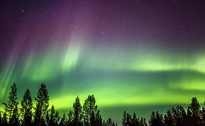 Photograph - Northern Lights Over The Sapmi Forest Karasjok Norway by Adam Rainoff