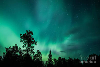 Photograph - Northern Lights Tonight by Lori Dobbs