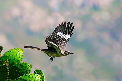 Northern Mockingbird Flying Art Print by Dan Redmon