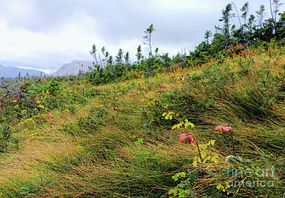 Photograph - Northern Pitcher Plants In Gros Morne Park by Les Palenik