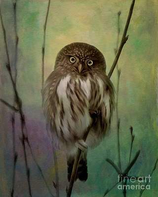 Pygmy Owl Wall Art - Photograph - Northern Pygmy Owl  by Beve Brown-Clark Photography