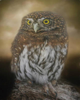 Digital Art - Northern Pygmy Owl by Teresa Wilson