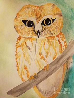 Painting - Northern Saw Whet Owl by Maria Urso