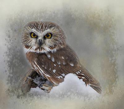 Animals Digital Art - Northern Saw-whet Owl by Teresa Wilson