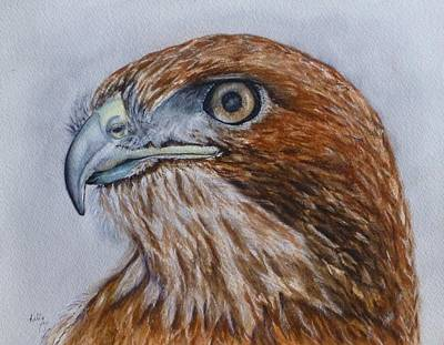 Painting - Northern Red Tailed Hawk by Kelly Mills