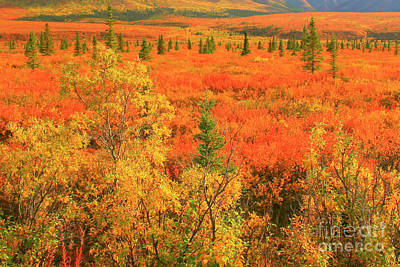 Photograph - Northern Tundra by Frank Townsley