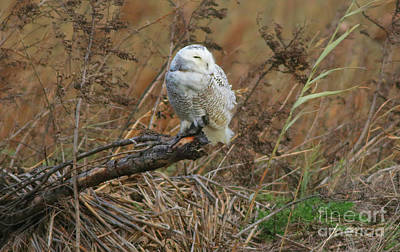 Photograph - Northern Visitor by Debbie Parker