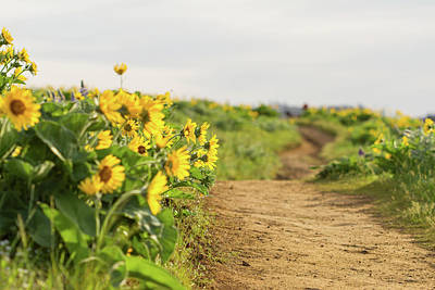 Photograph - Northwest Balsamroot On Mosier Plateau by Kunal Mehra