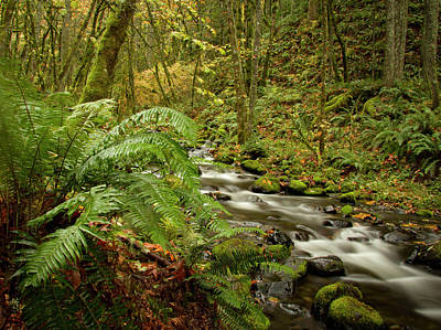 Photograph - Northwest River by Jean Noren